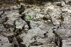 Dry cracked ground. Close up of dried earth with cracks Royalty Free Stock Photos