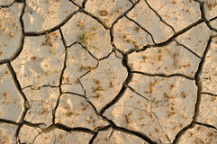 Dry cracked ground. With dry plants stock photography