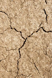 Dry cracked ground background Stock Images