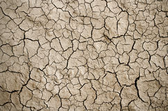 Dry cracked ground filling the frame as background Royalty Free Stock Photos