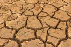 Dry cracked ground. Land with dry cracked ground Stock Photos