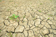 Dry cracked ground an the plant Royalty Free Stock Photos