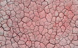Dry and Cracked ground Stock Images