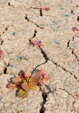 Dry cracked land Stock Photography