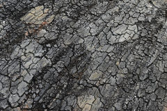 Dry cracked land background. Clay desert texture stock photo