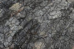 Dry cracked land background Stock Photo