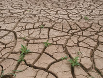 Dry cracked land Royalty Free Stock Image