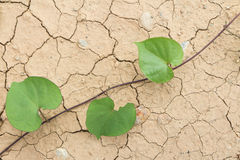 Dry cracked Land and green leaves Stock Photo