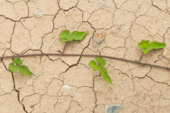 Dry cracked Land and green leaves Stock Images