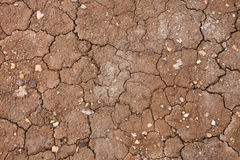 Dry cracked mud Stock Images