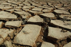 Dry cracked mud. In a color photography Stock Images