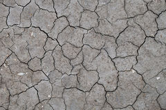 Dry cracked river bed with fossils Stock Images
