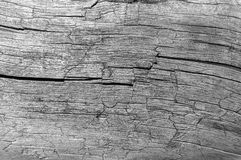 Dry cracked rotted wood background Stock Photography