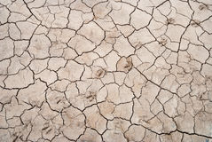 Dry cracked soil with animal footprints Stock Images