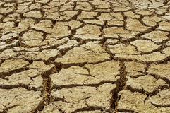Dry cracked soil dirt  during drought Royalty Free Stock Images