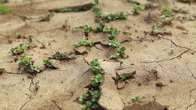 Dry cracked soil during a drought, Plants make their way during a drought Stock Images