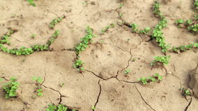 Dry cracked soil during a drought, Plants make their way during a drought Royalty Free Stock Photography