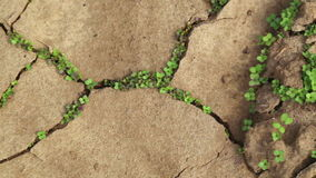 Dry cracked soil during a drought, Plants make their way during a drought Stock Photography