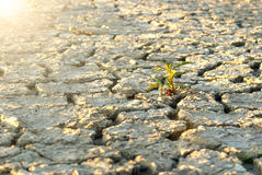 Dry cracked soil during drought time Stock Images