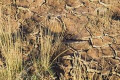 Dry cracked soil grass desert Royalty Free Stock Image