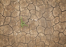 Dry cracked soil Royalty Free Stock Photo