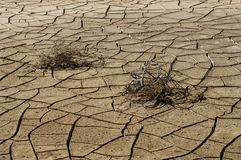Dry cracked soil and plant