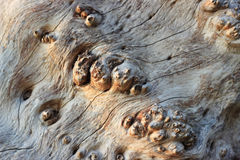 Dry cracked wood background texture pattern. Background texture pattern of dried , cracked wood in rural nature Royalty Free Stock Photo