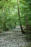 Halls Of Nature. A dry creek bed cuts through the woods like a man-made trail Stock Image