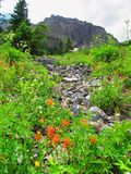 Dry Creek Bed Royalty Free Stock Photos