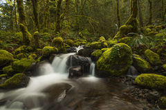 Dry Creek Royalty Free Stock Image