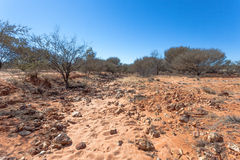 Dry Creek in outback Australia. Stock Images