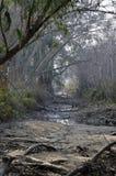 Dry creek. Royalty Free Stock Image