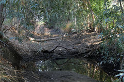 Dry creek. Royalty Free Stock Photography
