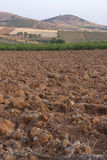 Dry crop field Royalty Free Stock Photos