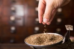 Dry Cumin Seed or Caraway seeds Stock Images
