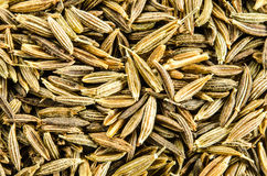 Dry cumin seeds background. Royalty Free Stock Images