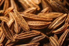 Dry cumin seeds or caraway. Extreme macro photography royalty free stock image