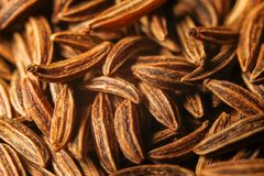 Dry cumin seeds or caraway. Extreme macro photography stock photos