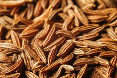 Dry cumin seeds or caraway. Extreme macro photography royalty free stock images