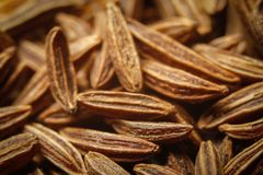 Dry cumin seeds or caraway. Extreme macro photography royalty free stock photo