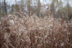 Dry curly grass royalty free stock image