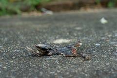 Dry död liten padda royaltyfria foton