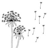 Dry dandelion flowers - abstract vector Stock Image