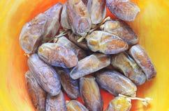 Dry dates on orange plate Stock Photography