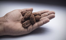Dry dates. Trader showing dates in his hand Stock Photos