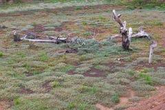 Dry, dead grass, stumps Stock Photos