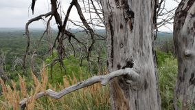 Dry dead tree on a hillside in the forest. The camera is moving on the slider. Parallel effect. Natural landscape. The. Tree died from lack of moisture. The stock video footage