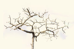 Dry dead tree standing in a blue sky. Stock Photography