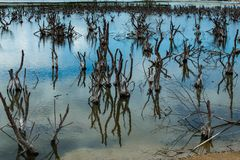 Dry dead trees in the swamp. stock photo