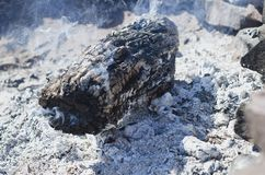 The dry dead wood stump in the firepit stock image